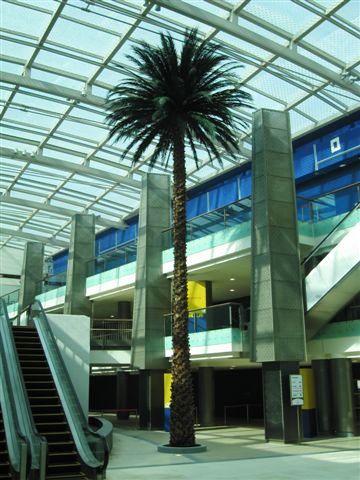 date palm 2