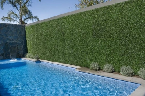 Ourdoor Green Wall by Pool