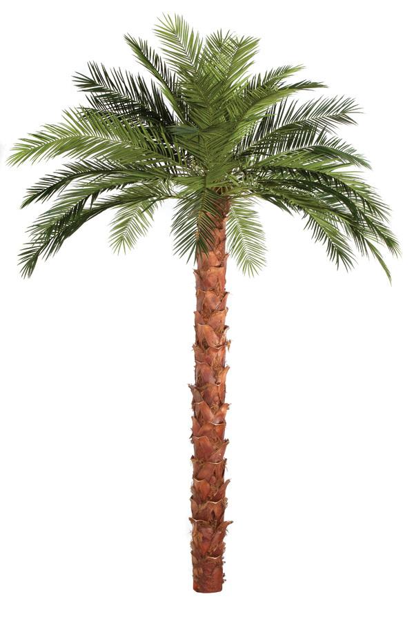 Replica Phoenix Date Palm Preserved Interiors